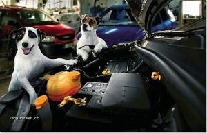 Dog service1