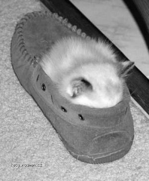 kitty shoe