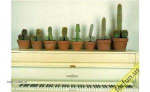 Kaktus curakovnik