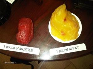 Muscle  Fat