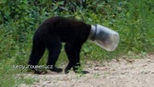 bear bottle