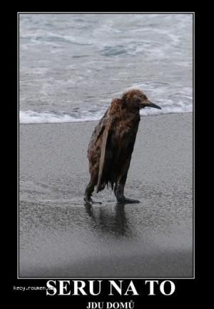 je patek