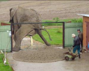 mame slona v jzd