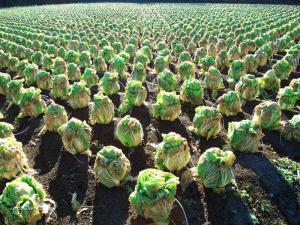 zeleninove zastupy