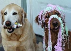 P Pes najlepsi priatel psa