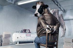 agent krava