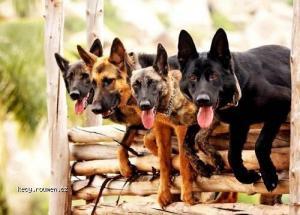 Canine Commandos in Training