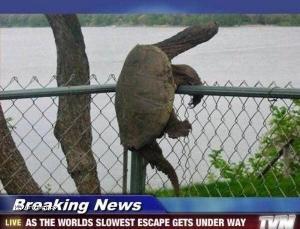 Breaking news fail