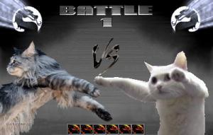 longcat vs longcat