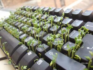 zelena klavesnice