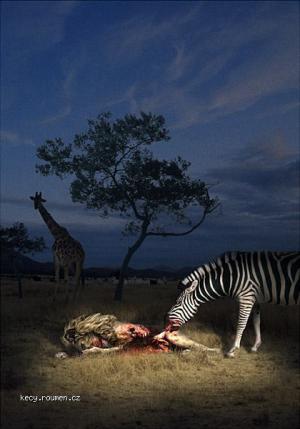 zrava zebra