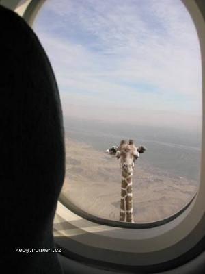 giraffe looool