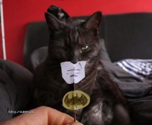 batcat2