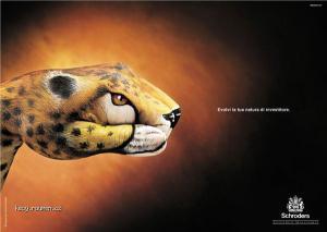 ruce leopard