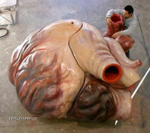 presny model velrybiho srdce