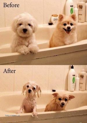 bathtime for pups