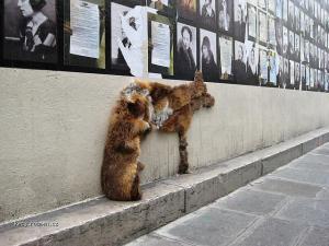 Weird Anti Animal Fur Guerilla Art4