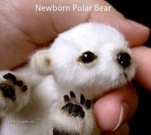 X Newborn Polar bear