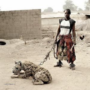 Domaci mazlicek  hyena