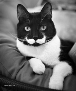 Do You Like My Mustache