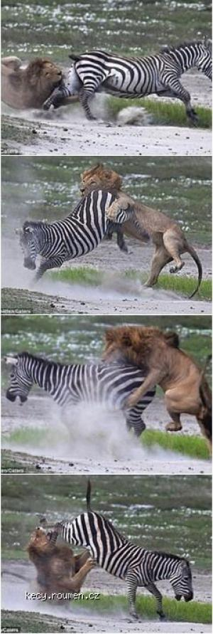Sometimes Its Better Not to Mess with Zebras