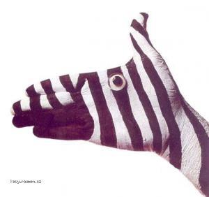 ruce zebra