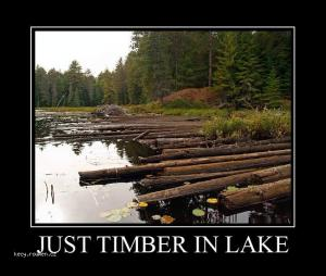 just timber in lake