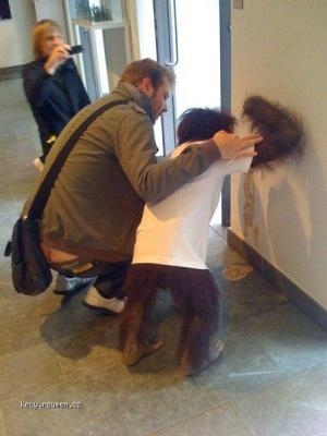simpanz ma kocovinu