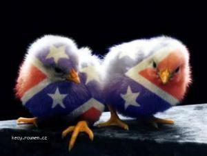 american chicks