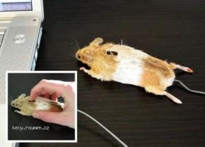 1AprilComputer Mouse