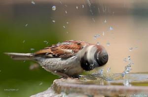 Ptaci vrtacka