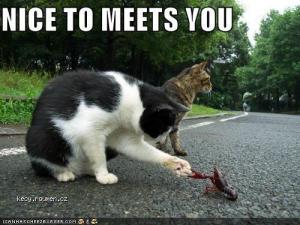catshakes