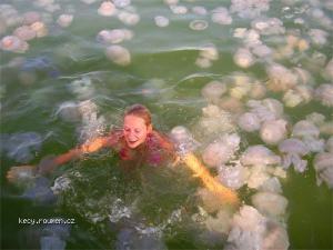 kvantum meduz v Cernem mori