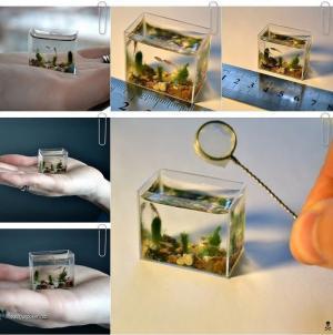 The World 27s Smallest Aquarium