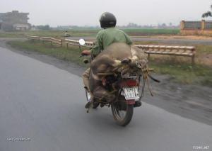 Transport 05