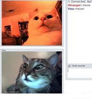 Cat Roulette