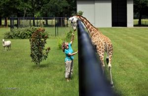Navstevnicka zoo k C5 95mi zirafu