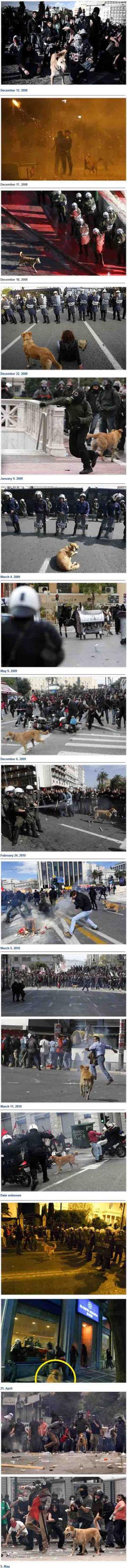 pes ktory miluje demostracie