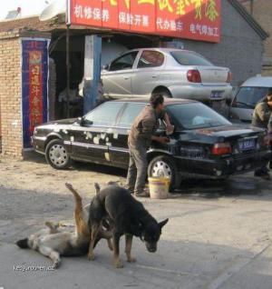 perv dogs