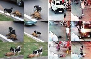 X Zvierata vs Ludia