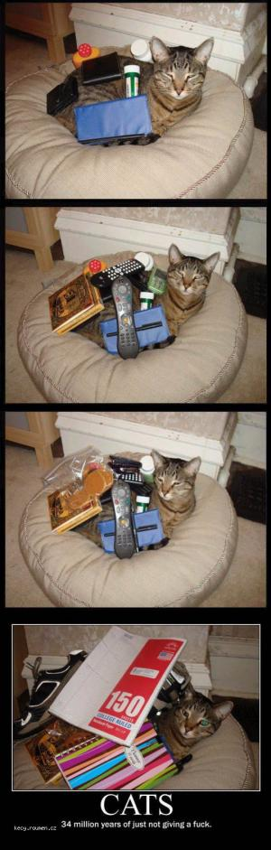 Cats dont give a F