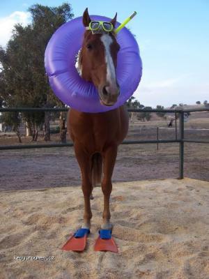 new  seahorse