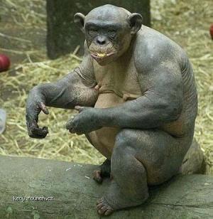 Monkey005