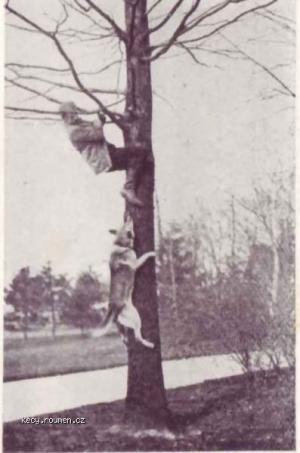 nekdy i pes leze na strom