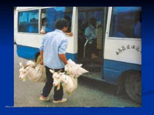 cestovni kozy