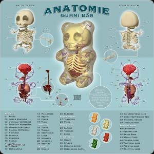 anatomiegummi bar