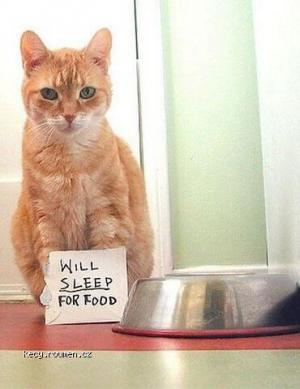 Will sleep for food