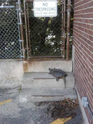 no trespassing 001