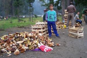 houbarska sezona v Rumunsku4