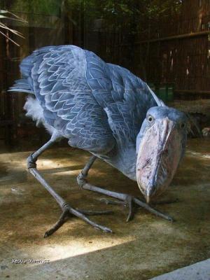 oiseaudrole
